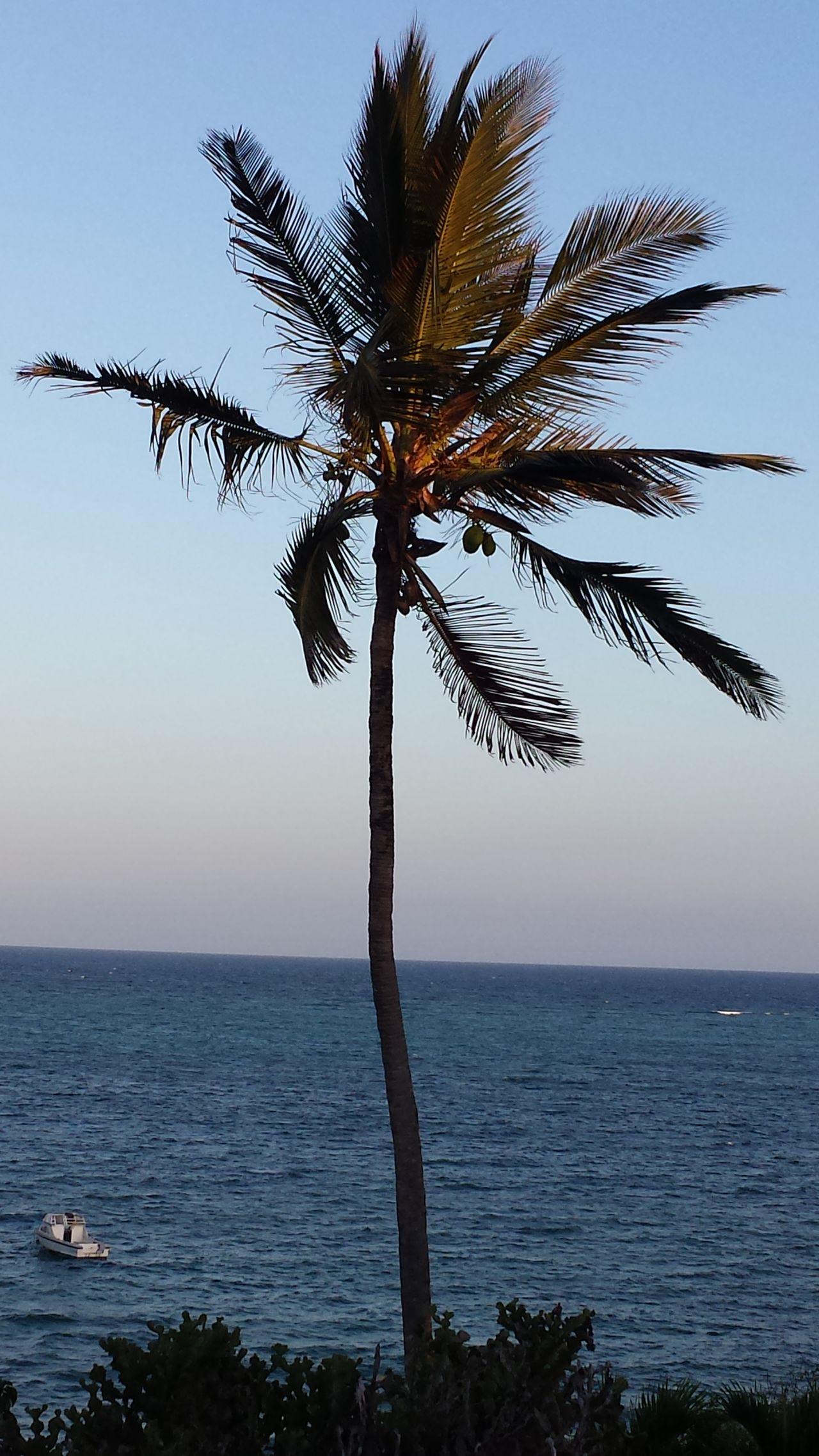 Kenya,Africa Water Landscape Sky Day Nature No People Ocean Beauty In Nature Palm Tree Blue Sky Kenya Traveling Africa Bluecolor