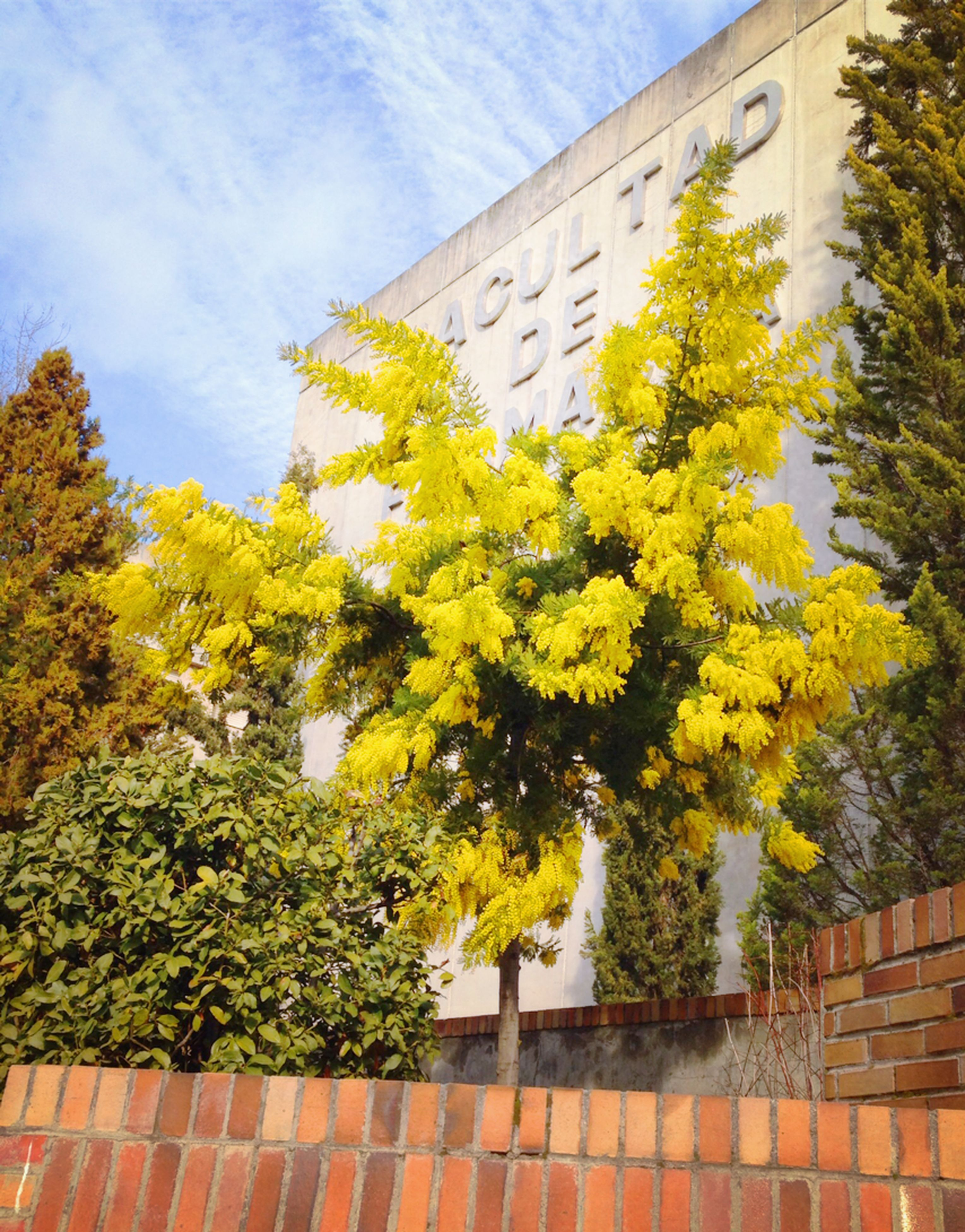yellow, flower, built structure, tree, architecture, growth, building exterior, plant, sky, railing, freshness, low angle view, nature, day, sunlight, outdoors, leaf, beauty in nature, no people, change