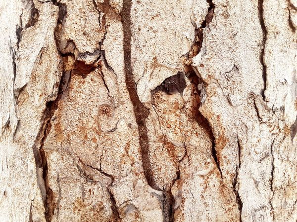 Anay dito anay doon. Bark Bark Texture Textures And Surfaces Tree Texture Barks Of A Tree Nature_collection Outdoor Photography Weekend Getaway EyeEm Gallery Patterns In Nature Nature Textures Week Of Eyeem Week On Eyeem EyeemPhilippines Eyeem Philippines Mobilelightroom Philippines EyeEm Art