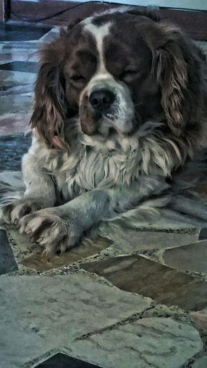 OMG. I'm tired Relaxing Taking Photos Tadaa Tadaa Community Tadaa Friends Cheese! My Dog I Love My Dog Dog❤