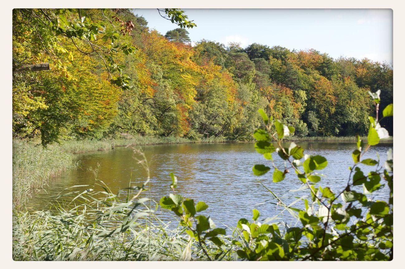 Colors Of Autumn Barnim Brandenburg
