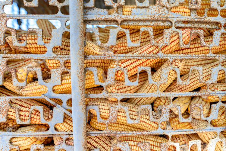 Corns Corns Backgrounds Close-up Corn Harvest Day Food Freshness Full Frame No People Outdoors