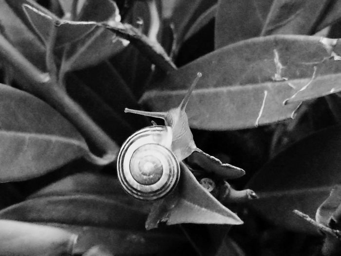 Snail One Animal Animals In The Wild Nature Animal Wildlife Outdoors Leaf Animal Themes Insect Plant Close-up Day Fragility No People snail