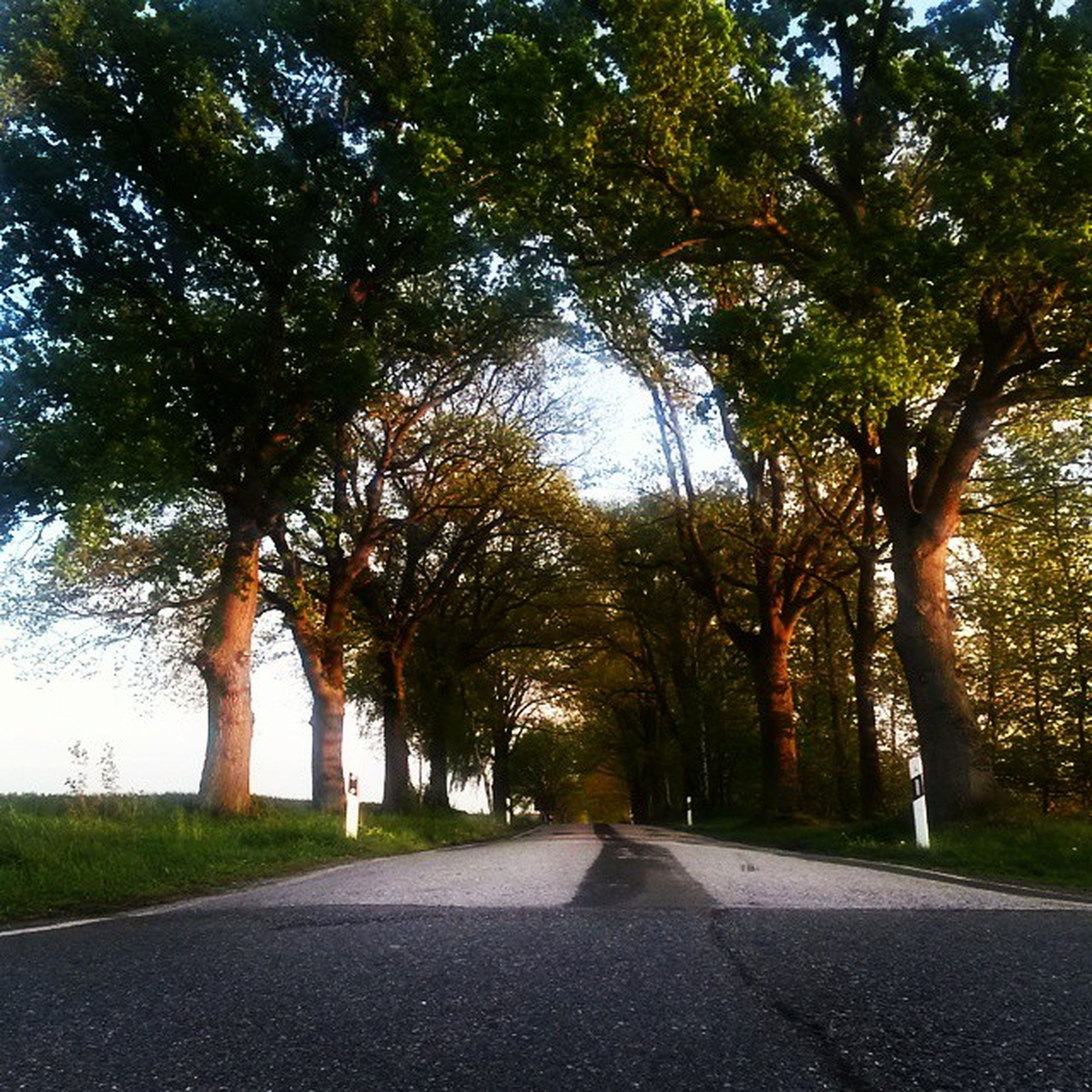 the way forward, tree, road, diminishing perspective, transportation, vanishing point, road marking, empty road, treelined, street, empty, tranquility, long, asphalt, growth, country road, nature, sky, tranquil scene, day