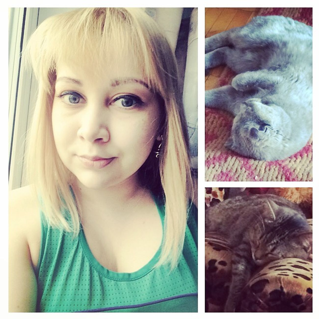 Кто любит котиков? Оля любит котиков 😜😆👍 кошатница сумасшедшаябаба безкотажизньнета