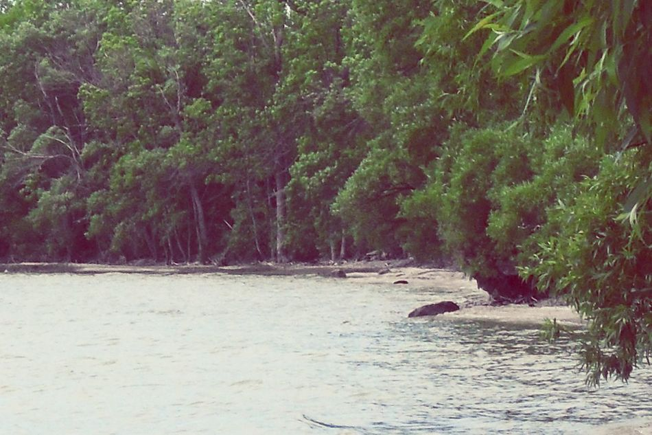 Water Trees Taking Photos Enjoying Life Prince Edward County