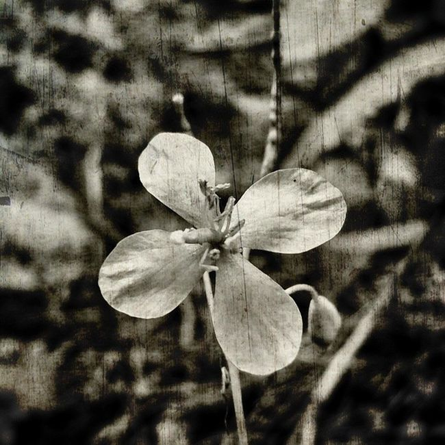 Flower Ic_flowers Nature_obsession_flowers Nature_obsession_macro nature_uc nature_perfection bnw_photografare bnw_captures bwsquare bw_society bw_poland loves_poland nature_shooters loves_naturelife youmobile igerspol topluxophotos mobilnytydzien bnwbutnot photo_storia