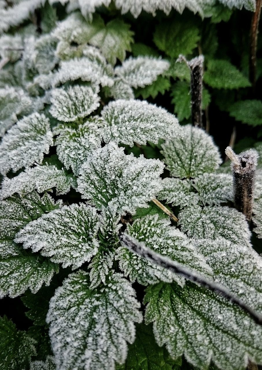 nature, winter, cold temperature, snow, growth, no people, weather, day, plant, beauty in nature, outdoors, green color, close-up, leaf, freshness, fragility