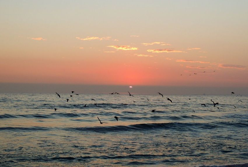 Lovely Scenery Sunset Lovers Sunset On The Beach Beach Life Beach Photography Quiet Sunlight Pastel Sky Sunset Silhouette Waves, Ocean, Nature Birds Birds In Flight Low Flying Birds Beauty In Nature Reflections Pastel Colors Enjoying Life Capture The Moment Reñaca Beach , Chile