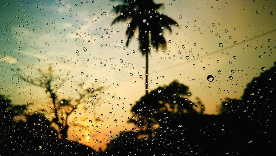 Beauty In Nature Close-up Nature Sky Tree Coconut Tree Raining☔ Sunshine ☀ Malaysia Sunset @team