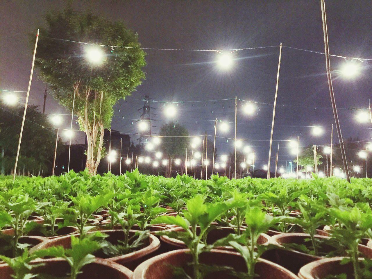 The Farm Of Flower Night Guangzhou