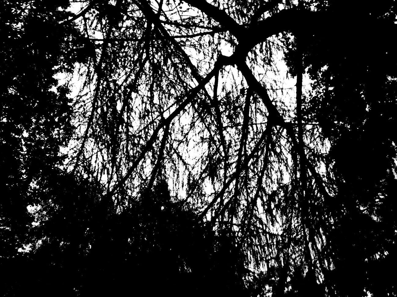 Garden Blackandwhite Black & White Trees Monochrome Abstract