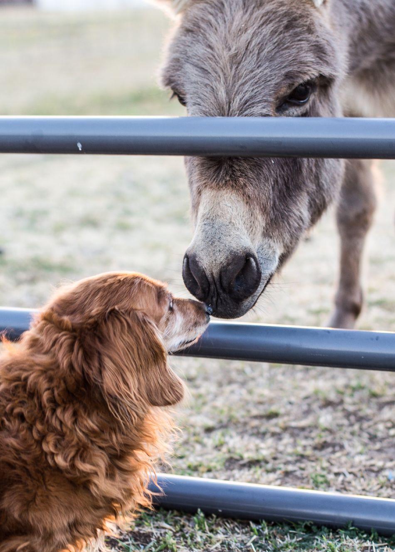 Beautiful stock photos of donkey, Animal Head, Animal Themes, Bonding, Day