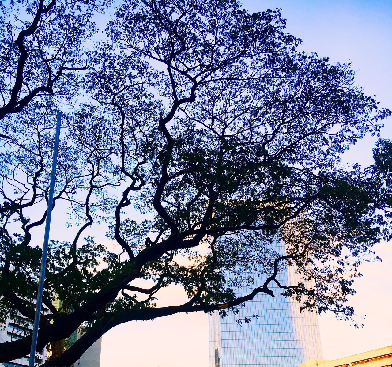 tree, low angle view, growth, branch, no people, day, nature, outdoors, sky, clear sky, beauty in nature
