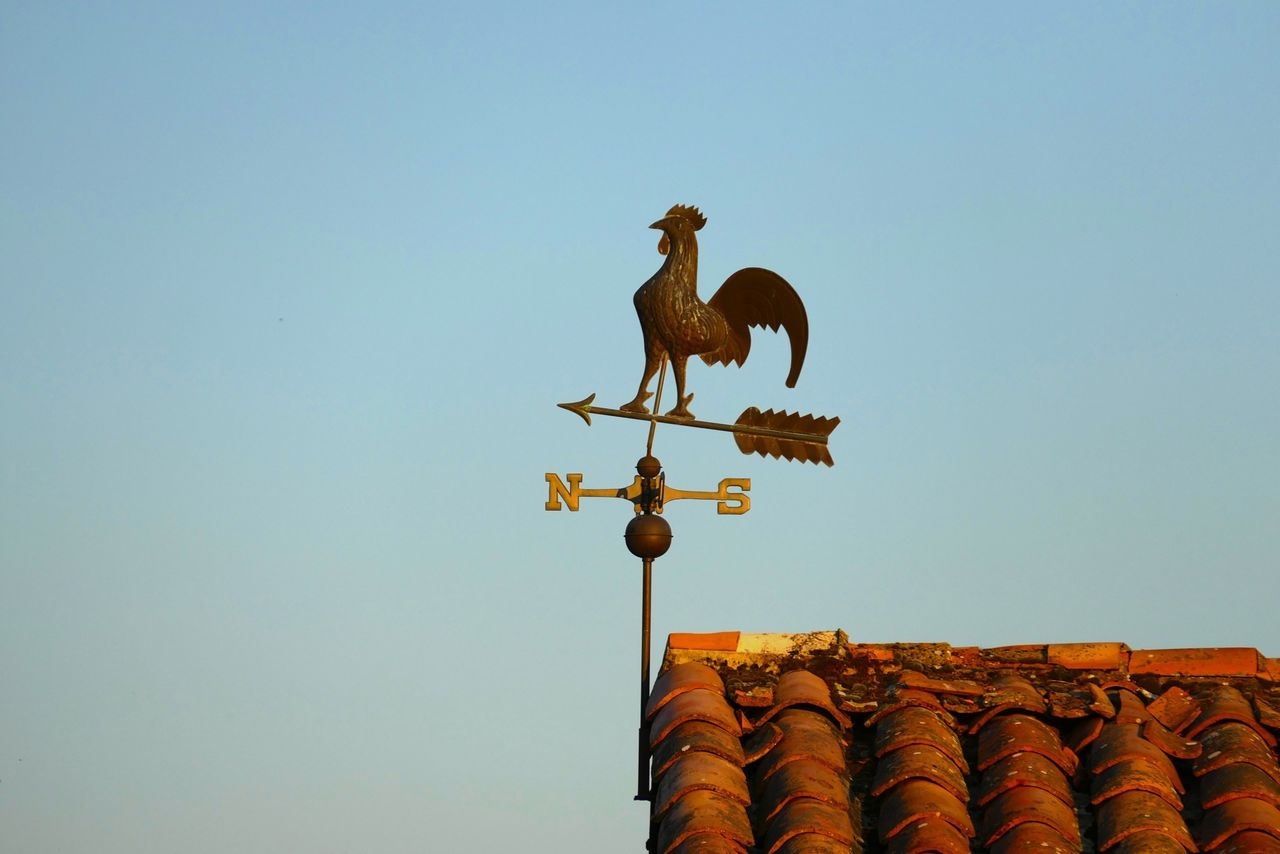 Beautiful stock photos of rooster, Animal Representation, Arrow, Clear Sky, Copy Space