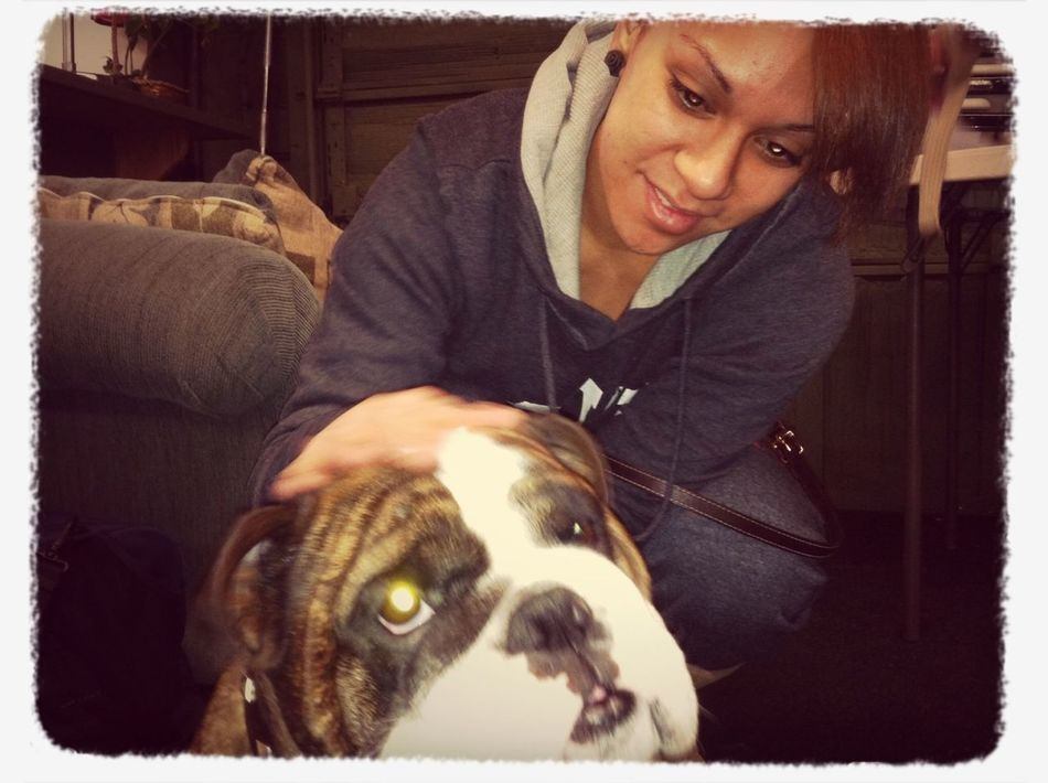 My dream dog!!! #englishbulldog #myfav #dreamdog #imagetitoneday