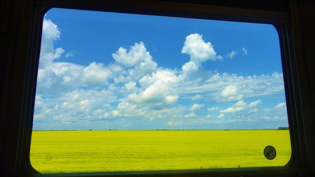 VIA Rail Canada from Toronto to Vancouver 🚈🇨🇦 View From The Window... Yellow Flowers Blue Sky And Clouds Train Window Landscape_photography Window View Canada Coast To Coast Beautiful Day Color Of Life カナダ 鉄道 Trains_worldwide Enjoying Life Relaxing Feel The Journey Canadiannature EyeEm Flower Flower Carpet Yellow Flower Want To Go Back Luxury