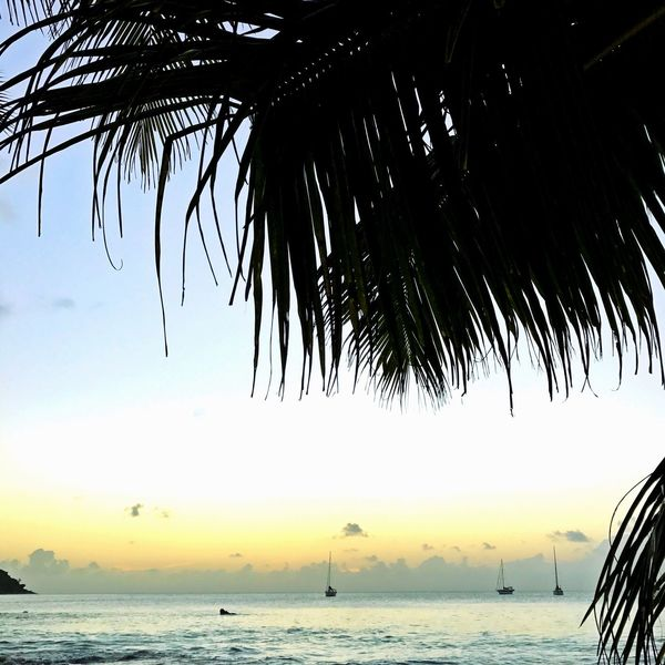 Sea Water Palm Tree Beach Tree Nature Scenics Tranquility Beauty In Nature Horizon Over Water Outdoors Silhouette Sky No People Day Nautical Vessel Wave Last Sunset Sunset In Seychelles Seychelles Islands Shotoniphone7 After Sunset