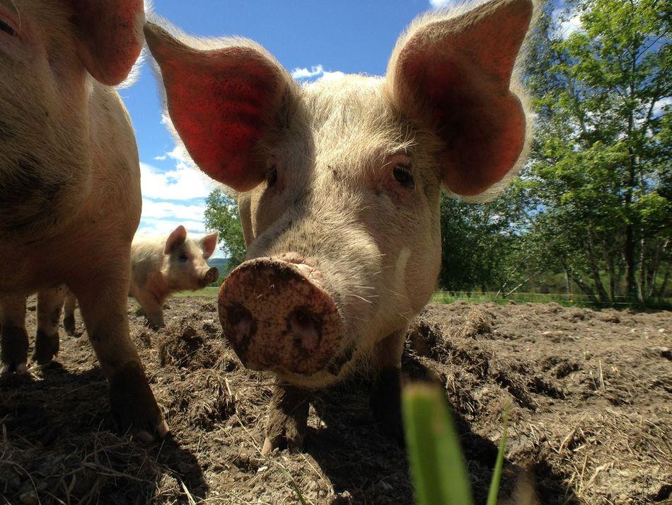 Beautiful stock photos of farm, Animal, Animal Part, Blue Sky, Close Up