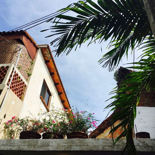 Plant pots, low angle Street Photo Street Photography Mexican Culture Architecture Outdoors Day Architectural Feature No People Palm Red Tiles Mexican Tiles Blue Sky Plant Pots Roof Garden Roof Gardens