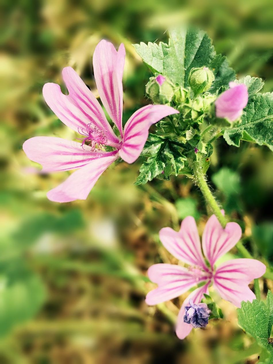 EyeEm SPAIN Flowers Universodepequeñascosas EyeEm Nature Lover