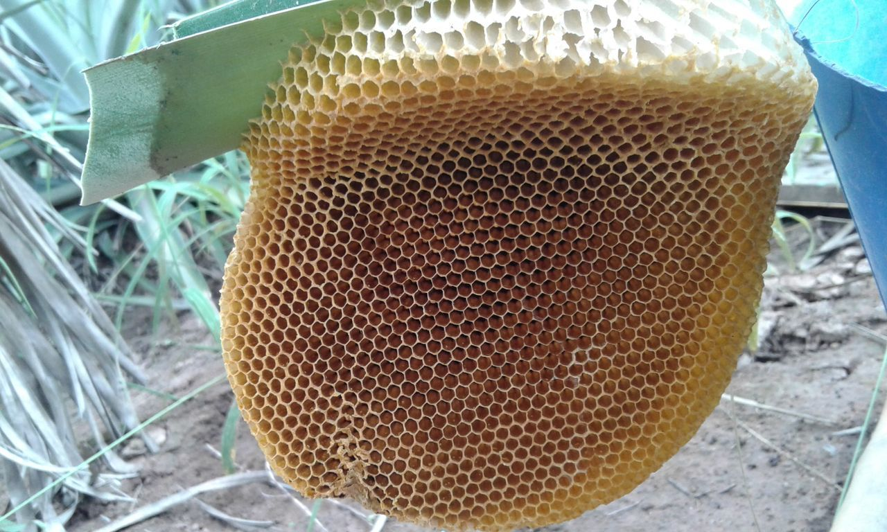 honeycomb, close-up, no people, beehive, day, outdoors, nature