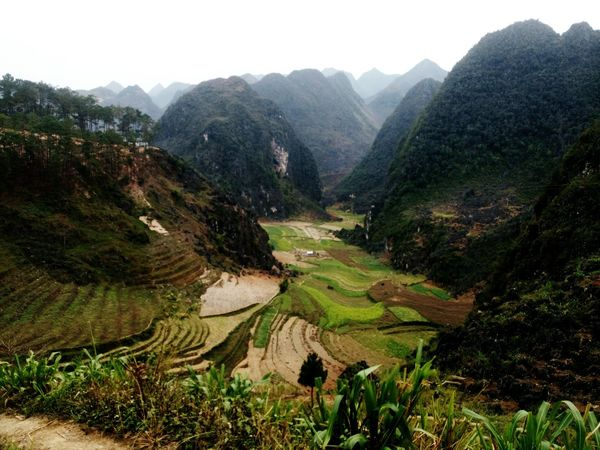 Vietnam Mountain Nature Landscape Beauty In Nature Outdoors Day Rice - Cereal Plant Vietnam Trip Views Vietnamtravel
