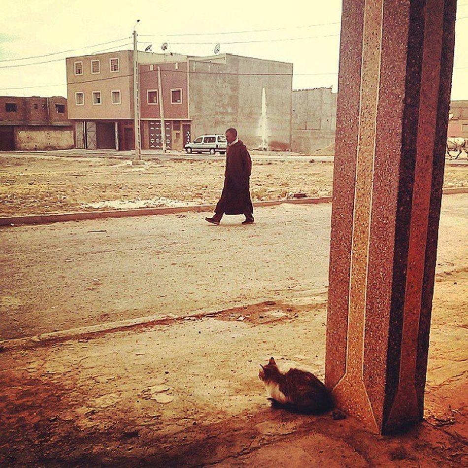 Maroc Ouedzem Morocco Cat