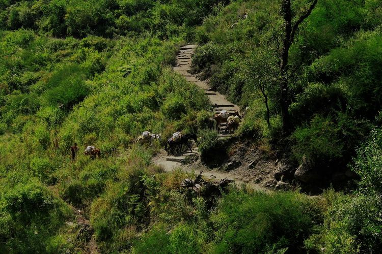 Animal Themes Day Forest Grass Growth Malana Magic Valley MALANA VILLAGE Mammal Nature No People Outdoors Tree Let's Go. Together.