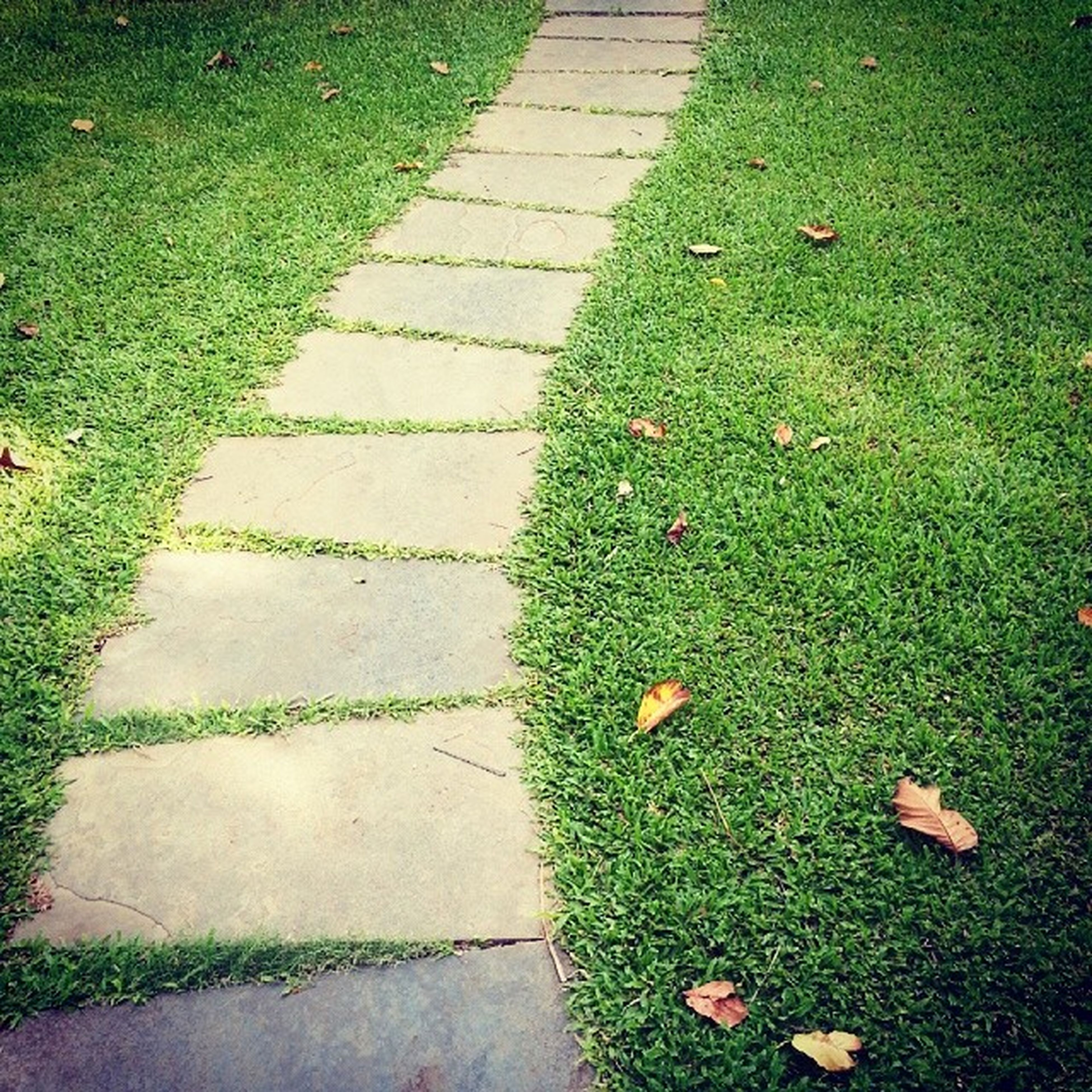 grass, high angle view, green color, grassy, field, footpath, growth, leaf, nature, plant, park - man made space, shadow, day, sunlight, outdoors, no people, lawn, street, paving stone, flower
