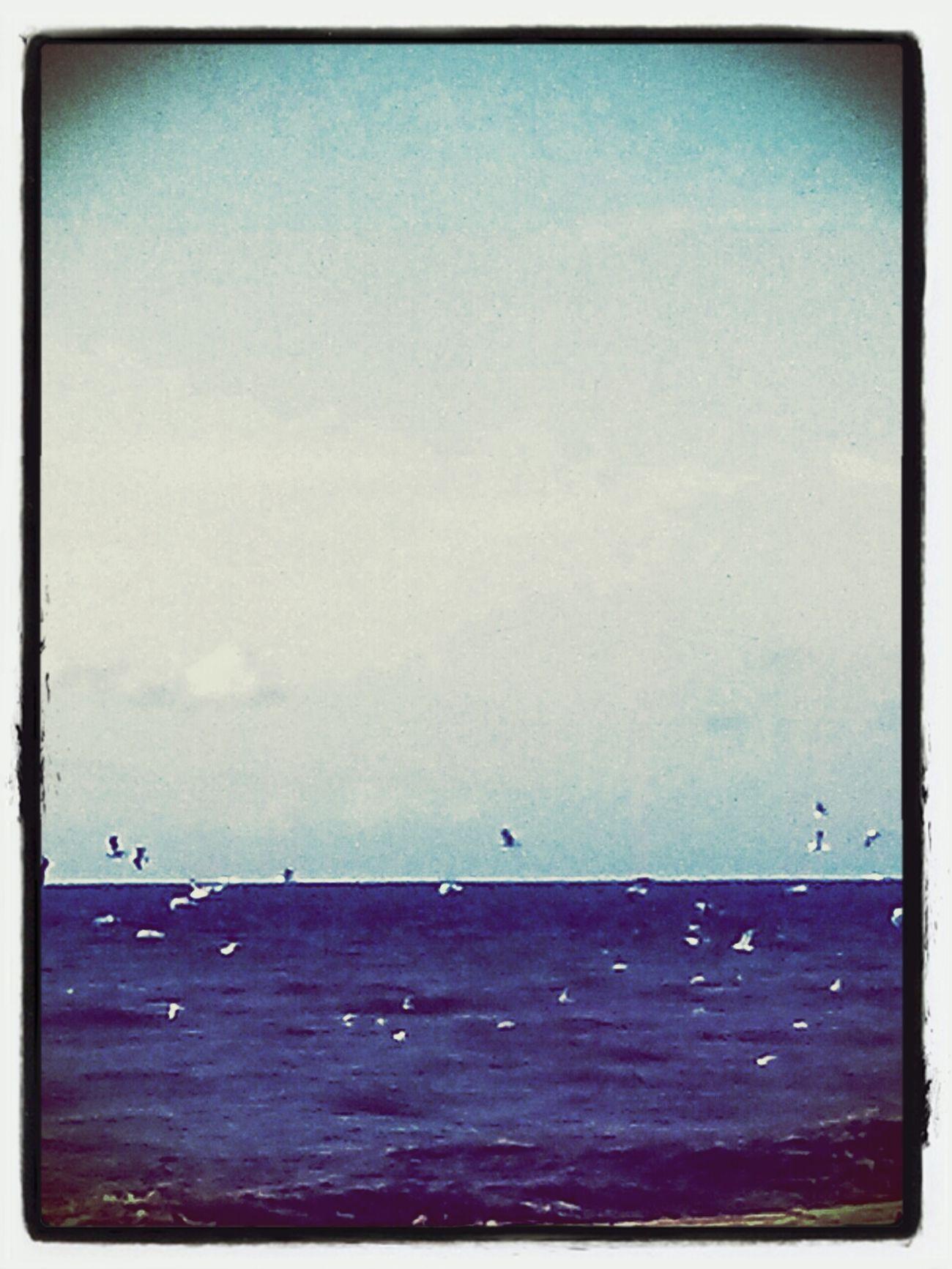Sea Mare D'inverno Volo Libero
