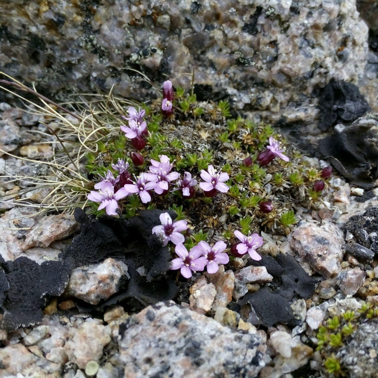 Северные цветы в Териберке