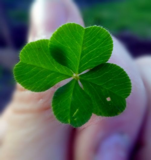 4 Leaf Clover 4 Leaf Lucky I Did It Check This Out Taking Photos