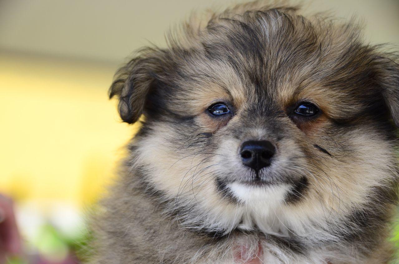 Dog Dogs Animal Themes Pets Puppy Animal Head  Dog Love Puppy❤ Cute Pets EyeEm Animal Lover Smiling Dog