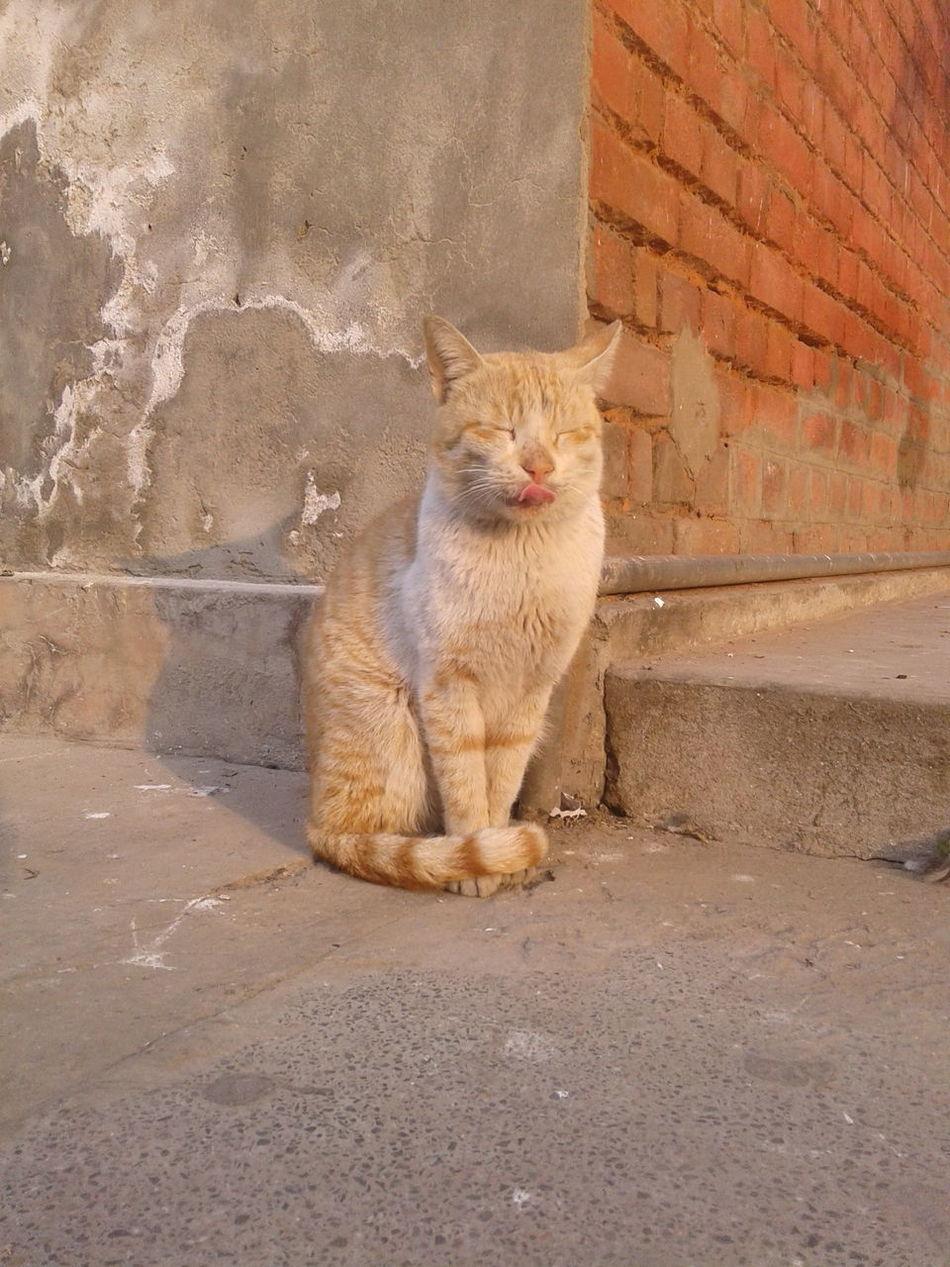 First Eyeem Photo Catsagram Catoftheday Cat Lovers Catinthesun Ilovecat