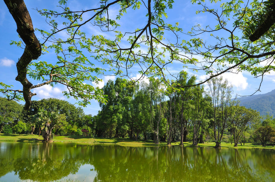 Lake garden during beautiful day Attraction Park Backgrounds Beauty In Nature Blue Branch Day Garden, Green Color Growth Lake Nature No People Outdoors Reflection Sky Tourist Attraction  Travel Destinations Tree Water
