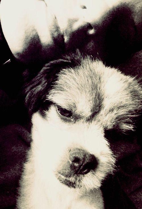 lovely Leo 🐶 Cute Pets