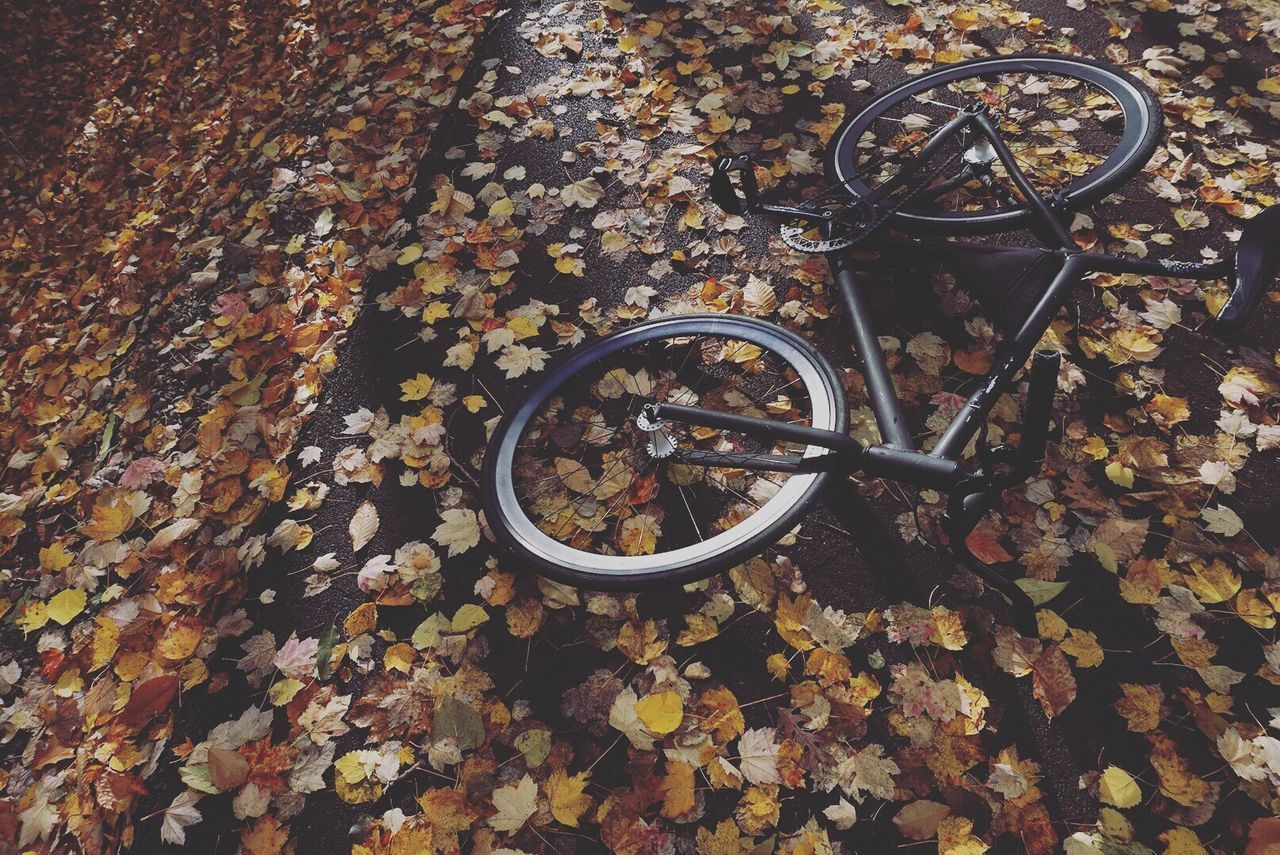 change, autumn, metal, leaf, no people, bicycle, high angle view, outdoors, wheel, day, nature