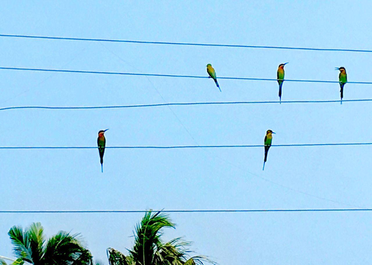 Tropical Birds On A Wire Sky Blue Clear Sky