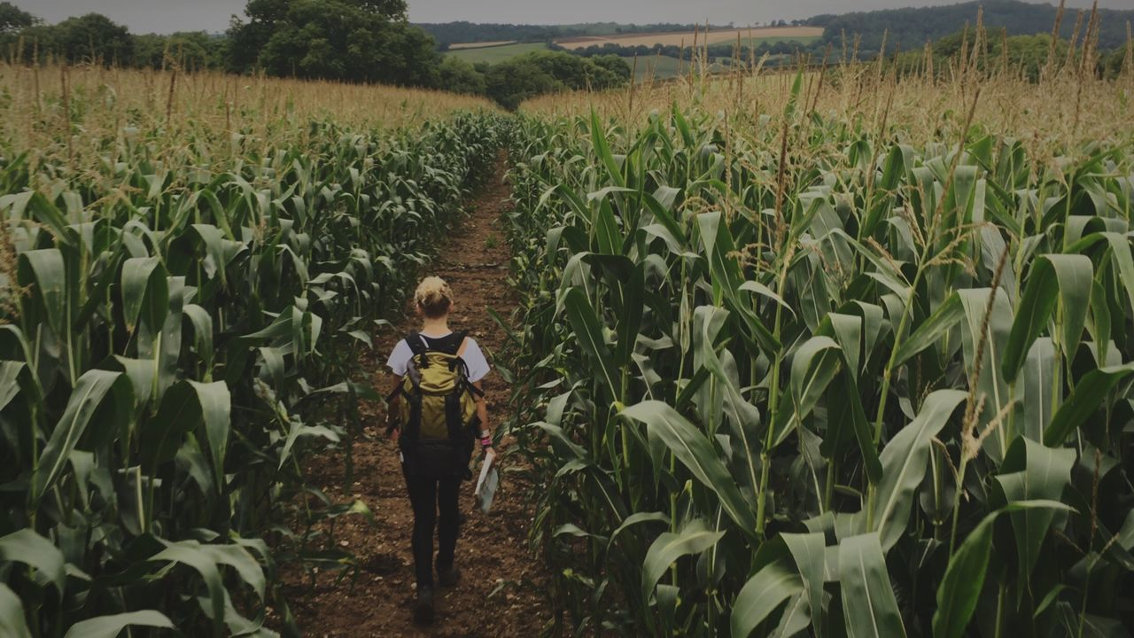 Walk In The Fields 💞 First Eyeem Photo Outdoors Adventure Fun