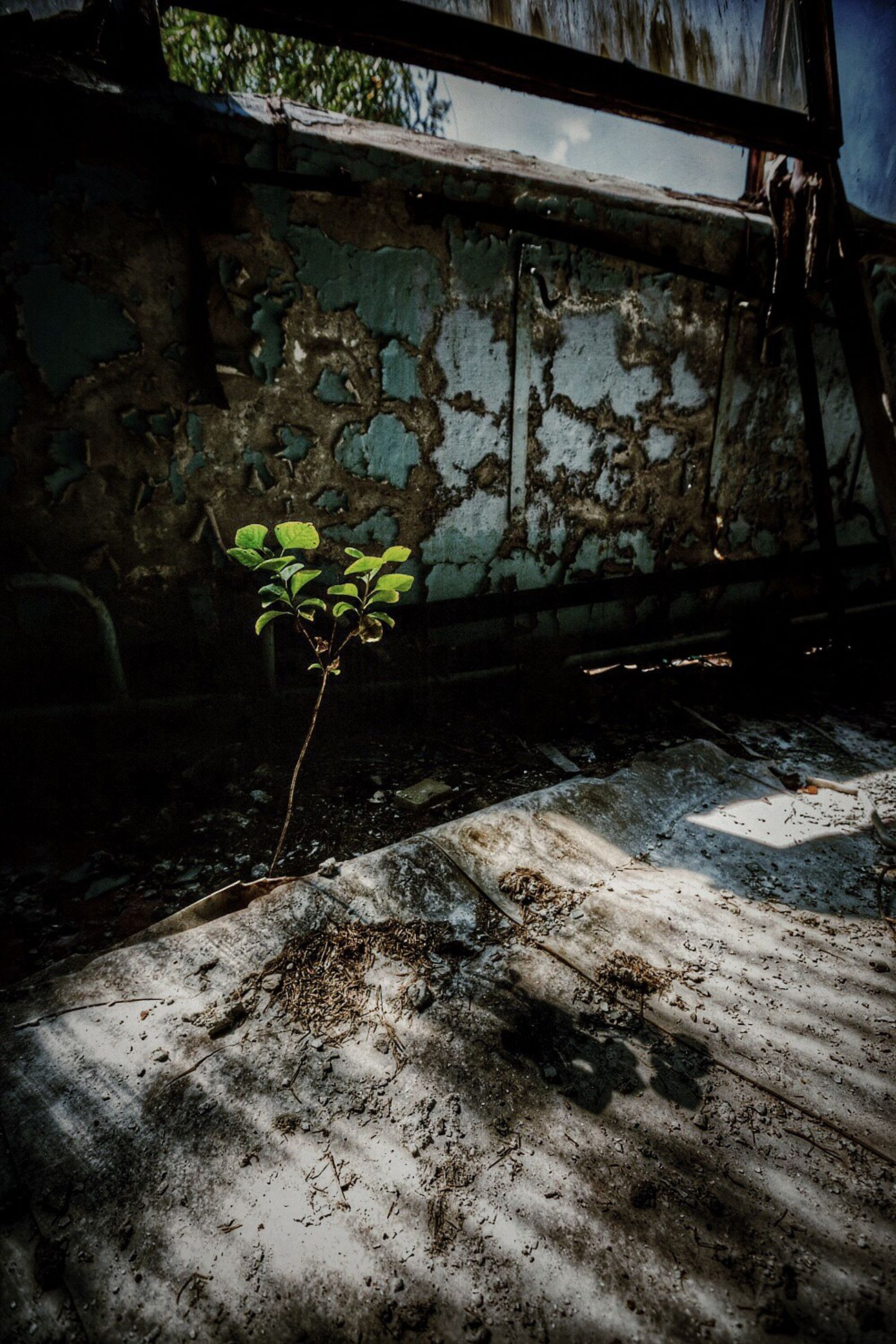Ukraine Chernobyl Traveling Light And Shadow Darkness And Light Ruins Urbex 廃墟 Funiku