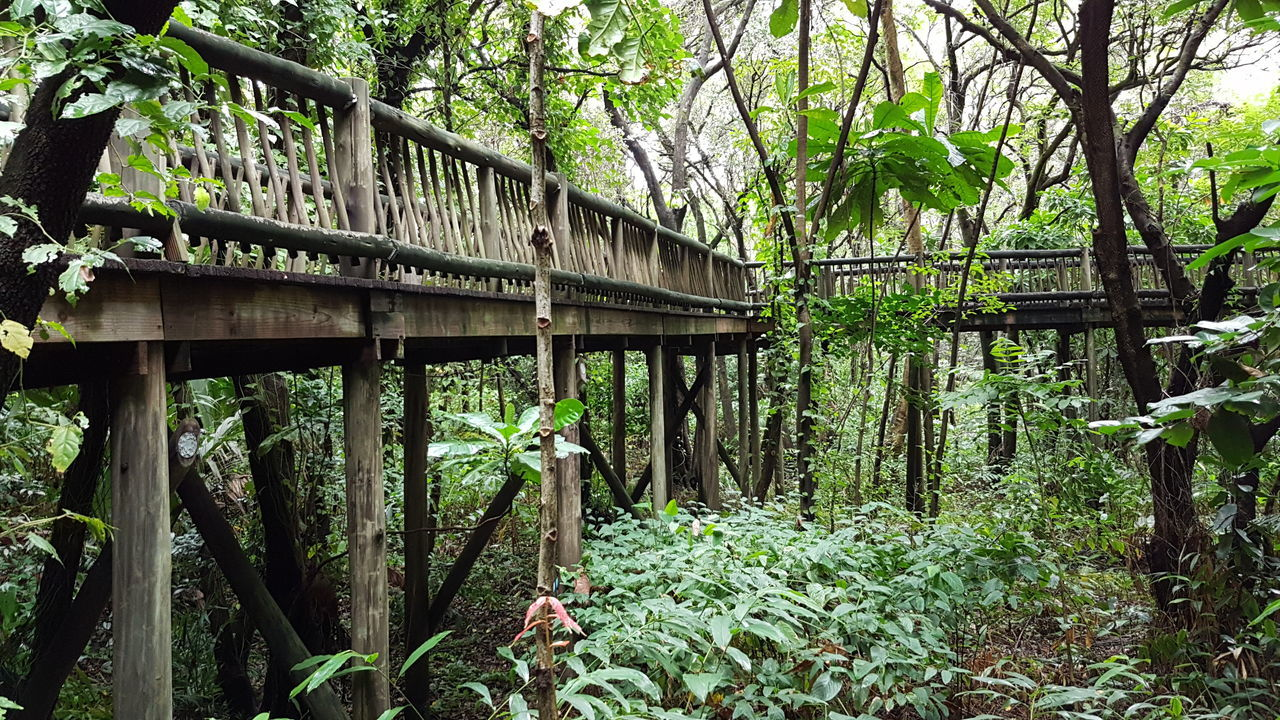 Tree Growth Green Color Nature Day Plant Greenhouse Connection Outdoors No People Architecture South Africa 🇿🇦 Beauty In Nature God's Glory On Display  Elevated Walkway