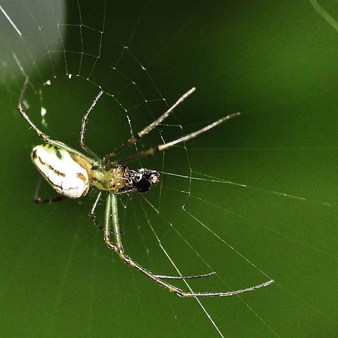 Spider Spiderworld Ig_spiders Macroworld_tr