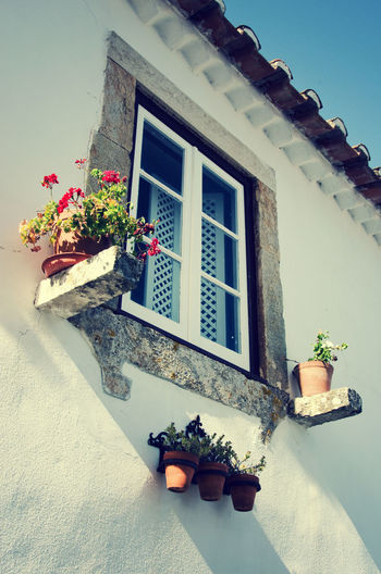 Architecture Clear Sky Flower Pot Flowers House Portugal Sunny Day Wall Window Óbidos