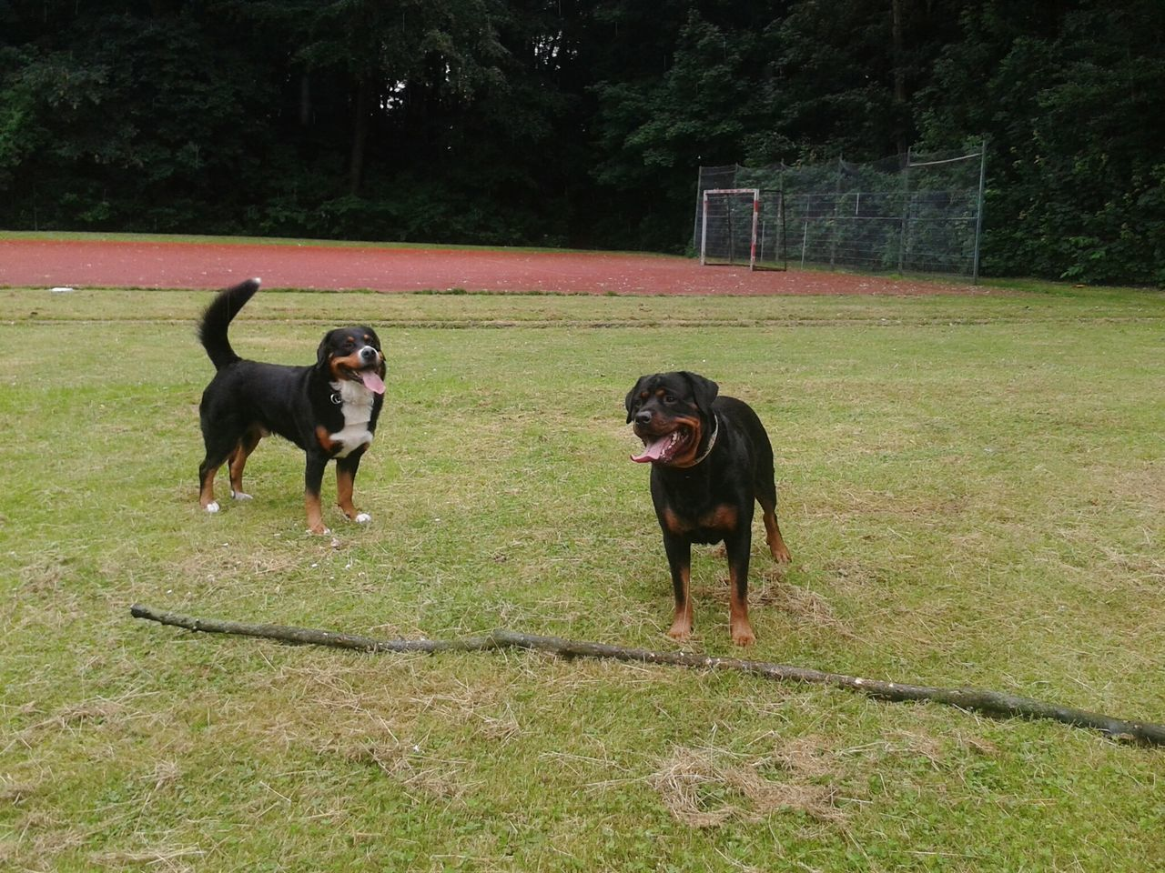 Freya Mit Rocky Hunderunde Hundefreundschaft Dogs Dogdog Taking Photos Dogslife