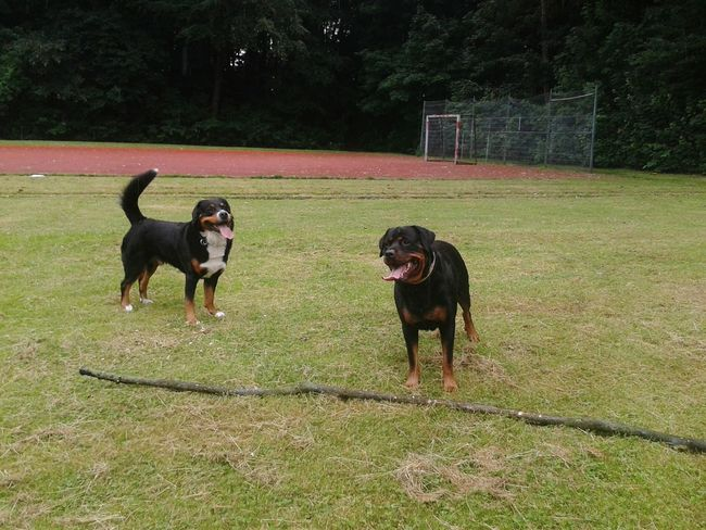 Freya Mit Rocky Hunderunde Hundefreundschaft Dogs Dogdog Taking Photos Dogslife