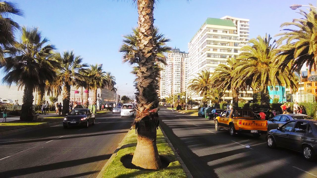 palm tree, car, tree, built structure, transportation, architecture, building exterior, land vehicle, real people, mode of transport, day, street, outdoors, city, road, growth, clear sky, lifestyles, one person, sky, people