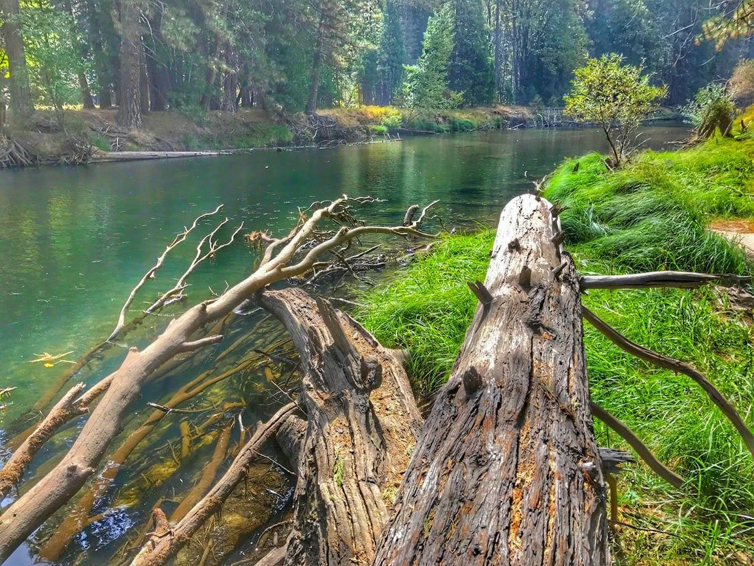 Nature Water Tree Green Color No People Beauty In Nature Tranquility Forest Scenics Lush - Description Yosemite National Park Yosemite, California Yosemite Valley Tree Power In Nature Clear Waters