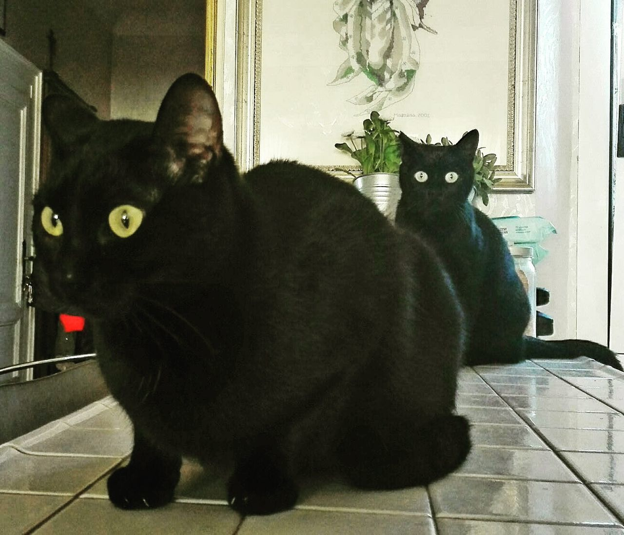 Lieblingsteil Cat Cat Photography Catoftheday Catsofinstagram Cats Of EyeEm Black Cats Are Beautiful Black Cats
