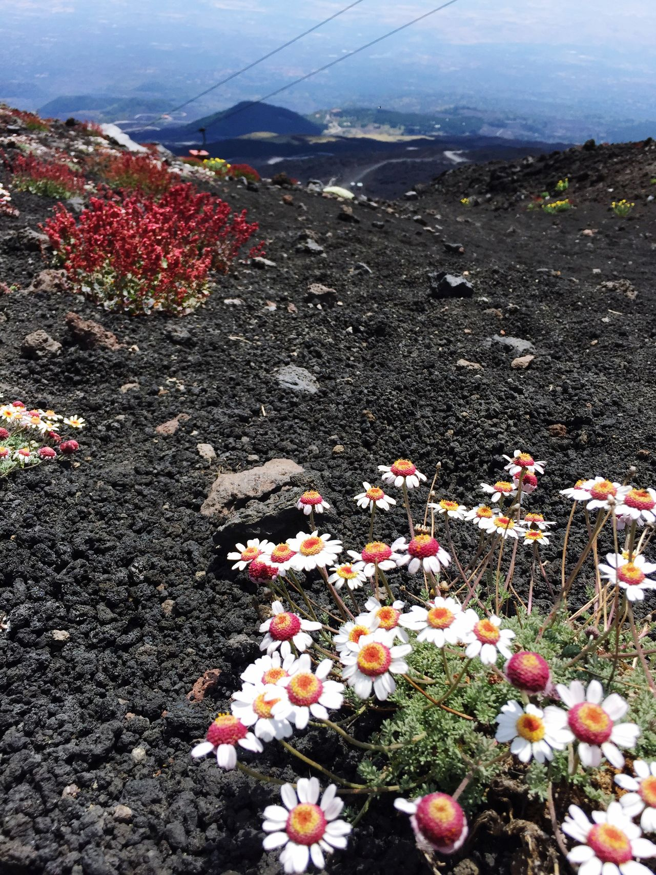 Sommergefühle summertime in Sicily, Etna volcano Flower Nature Day Beauty In Nature Outdoors No People Mountain Freshness Tranquility Plant Growth Fragility Close-up Flower Head Mountain Range Etna